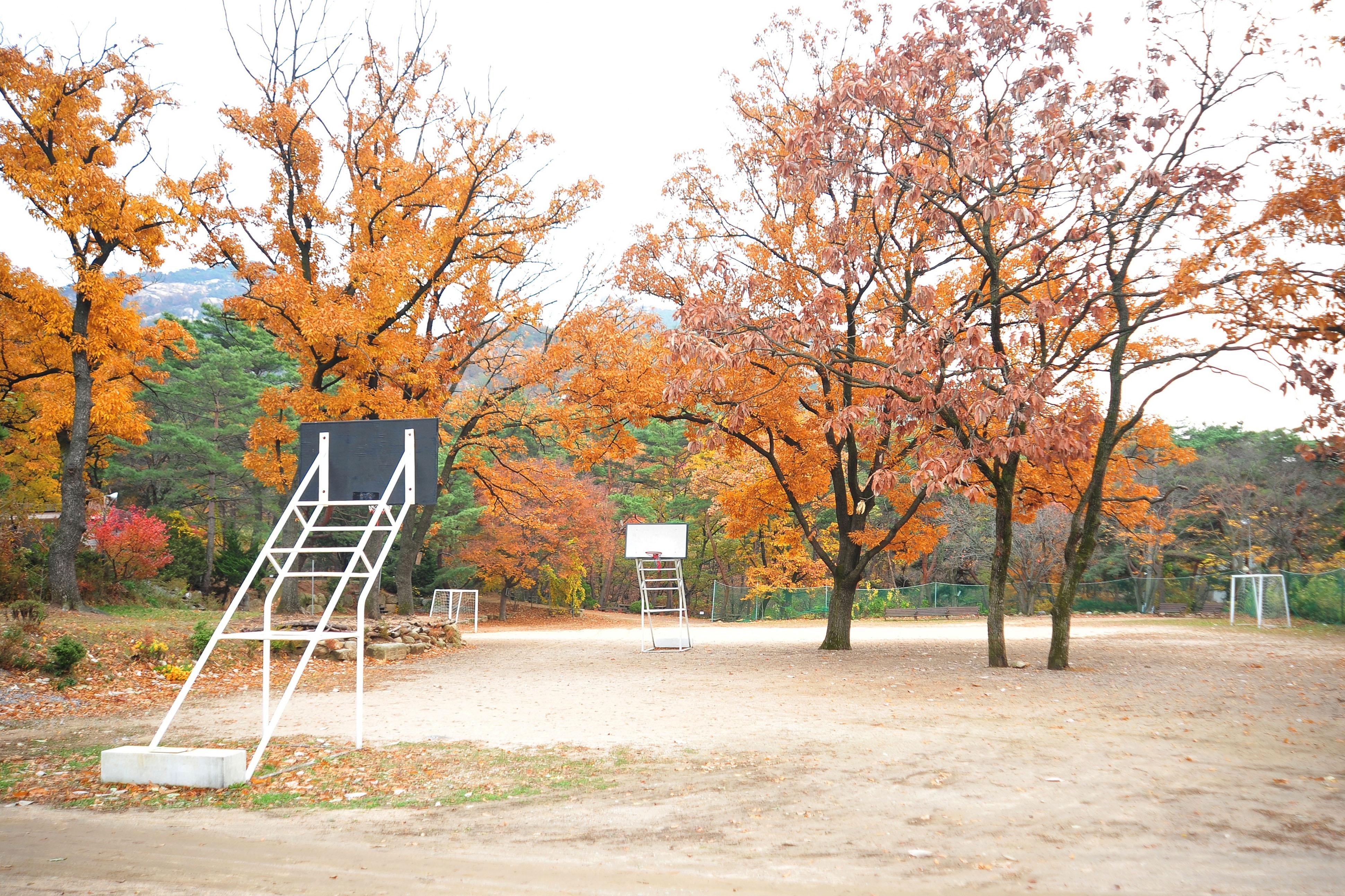 팀수양관 대운동장/가을